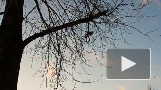 Украинец покончил с собой на кладбище в Колпино