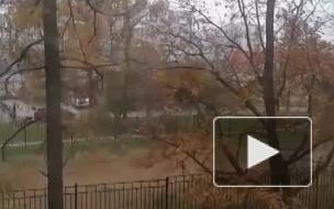 В Петербург пришла зима: пользователи делятся фото первого снега