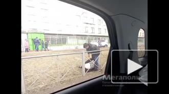 На Краснопутиловской произошла драка с участием мужчин и женщин: видео