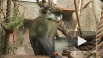 В честь дня рождения зоопарка торжественно чавкали животные