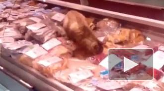 На защиту кота-обжоры из Владивостока встали Онищенко и Куклачев