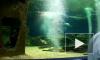 В Петербурге появится океанариум с крокодилами на проспекте Славы