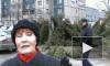 Елочные спекулянты завалили Петербург непроданными елями