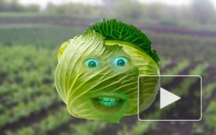 Бодрая грядка: рэп-новости от свежих овощей!