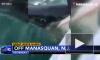 Видео: в США рыбаки едва не поймали пятиметровую белую акулу