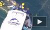 Видео: В Австралии спасли китенка под надзором матери малыша