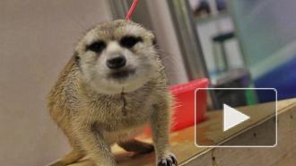 Петербуржцев потянуло на животную экзотику