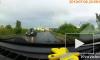 Видео: водитель пропустил уток, которые переходили дорогу в Кудрово