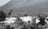 Южную Африку засыпало снегом
