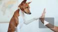 В Госдуме не оценили идею о налоге для владельцев собак