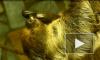 Ленивых ленивцев в Ленинградском зоопарке заставляют делать зарядку