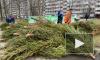 В Петербурге можно сдать на переработку новогодние ели в помощь диким животным