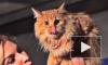 В Петербурге показали котовасию в блокбастерах