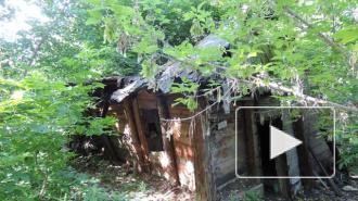 Маньяк надругался над 16-летней девушкой, обмотал руки скотчем и вывез в лес: ее нашли отдыхающие в полуживом состоянии