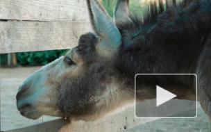 Центр Велес: история семьи осликов, которых в цирке решили пустить на колбасу