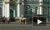 На Дворцовой набережной петербуржца сбила лошадь