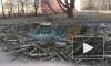 Местные жители: председатель ТСЖ незаконно вырубила деревья по проспекту Просвещения