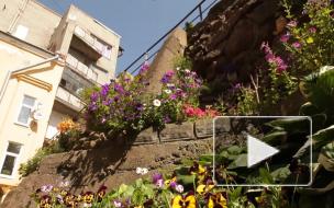 """Видео: В Выборге """"цветут"""" не только центральные улицы"""