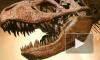 В Японии нашли зубы 10-метрового тираннозавра, жившего 81 млн лет назад