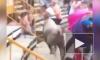 Видео: в Испании бык ранил 17 человек на трибуне