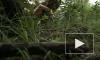 Уфологи: Над Кемеровской областью на сверхзвуке пролетело НЛО и село в огород