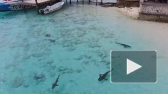 Квадрокоптер спас маленького мальчика от гибели в челюстях акул