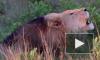 ЮАР: В заповеднике львы съели браконьеров, которые охотились за рогами носорогов