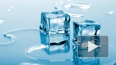 Жириновский принял участие в Ice Bucket Challenge ...