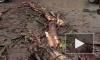На Мытнинской дерево упало рядом с детской площадкой