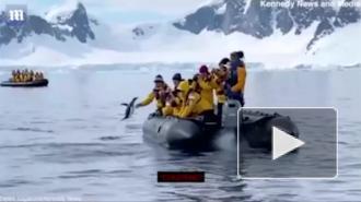 В Антарктиде пингвин спасся от косатки, запрыгнув к туристам в лодку