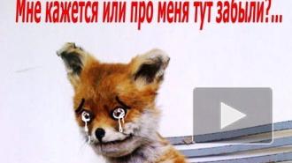 Упоротый лис метит в почетные граждане Петербурга