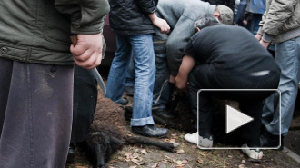 В Петербурге на Курбан-байрам тайно резали баранов