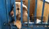 Петербуржцы стали чаще брать животных из приютов на карантине: репортаж Piter.TV