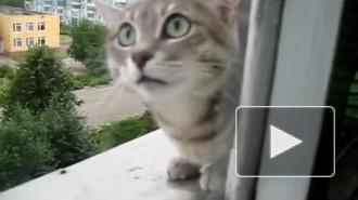 Кот-верхолаз напал на оператора из окна