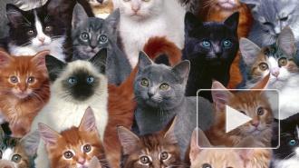 В горящем приюте для животных под Петербургом погибли кошки