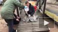 Спасли тюленя