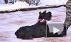 Собаки-таможенники и их двуногие однополчане покорили петербуржцев