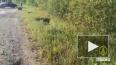 Водитель Lada Granta разбился в Киришском районе Ленобла...