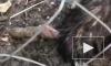 Видео с умирающим страусом из сочинского Дендрария взбудоражило Интернет