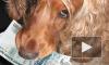 Петербургские депутаты предложили ввести налог на домашних собак