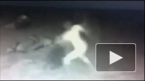 Пьяных хулиганок, избивших тюленей на пляже в Калифорнии, ищут по видеозаписи