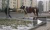 Полицейские задержали лошадь в Муринском парке