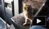 В Турции кошка стала виновником страшной аварии автобуса с туристами, одна россиянка погибла