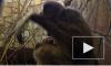 Появилось видео с малышом гиббона, который родился в Ленинградском зоопарке