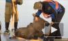 Трогательная история о спасении норвежского лосенка покорила интернет
