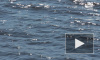 Шестеро петербуржцев нелегально катались на байдарках по Финскому заливу