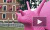 Видео: гигантские розовые улитки атаковали Новую Голландию