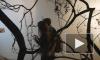 СОБСТВЕННАЯ ДАЧА: выставка Леонида Цхэ
