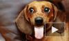 Жительница Московской области украла у магазина чужую собаку