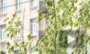 В сквере на улице Типанова в честь Дня города высадили молодые клены